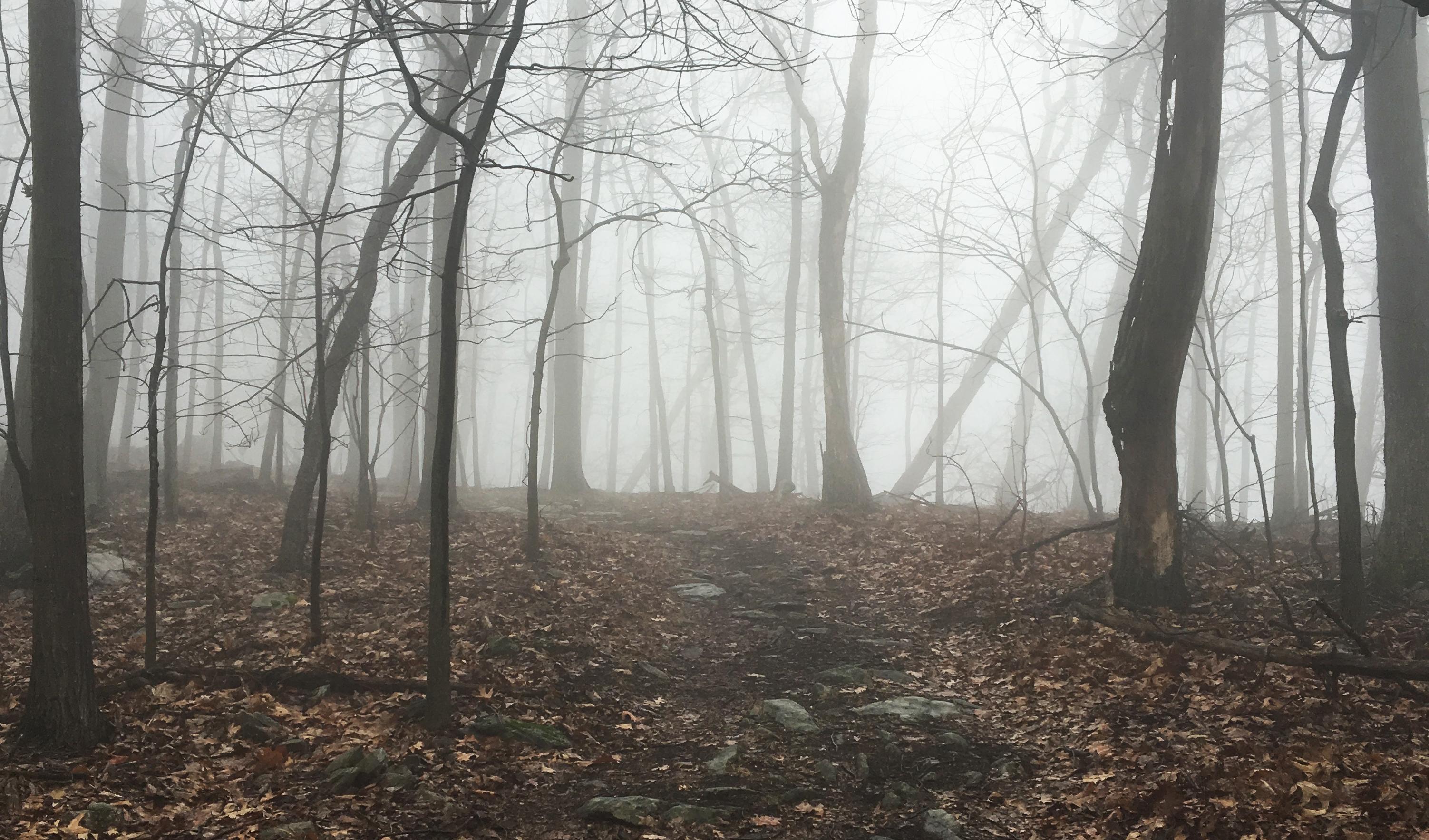 La jolie forêt enchantée